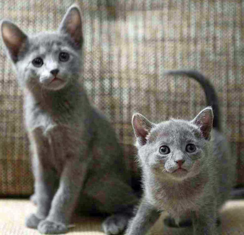 Какого котенка выбрать в подарок?