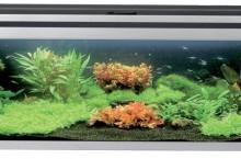 Стоит ли делать аквариум своими руками?
