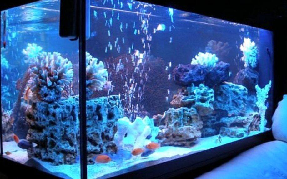 Что должно быть в аквариуме?